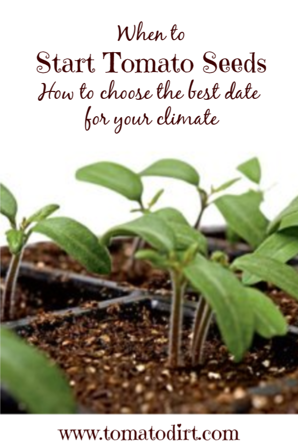 When to start tomato seeds: how to choose a start date with Tomato Dirt #GrowingTomatoes #HomeGardening