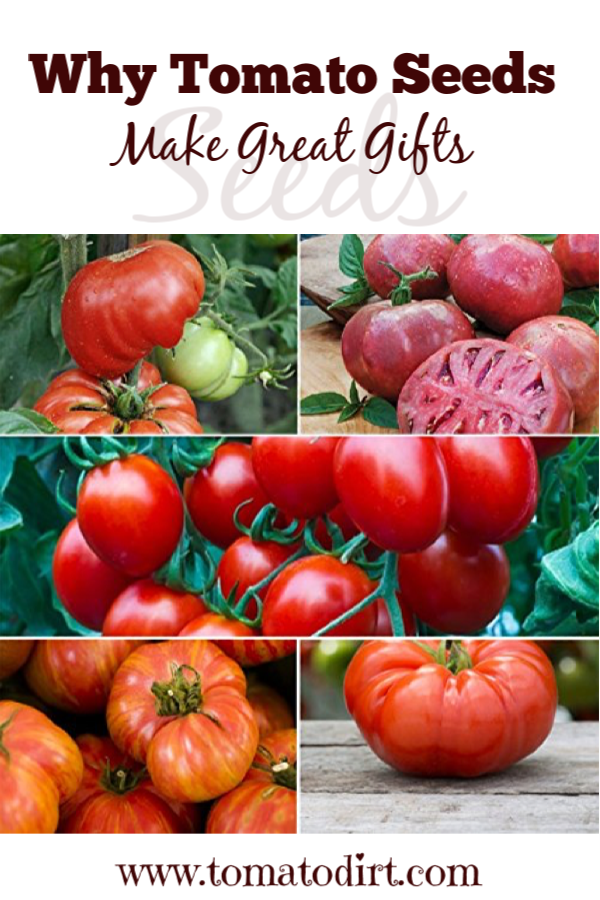 Tomato seeds are a great gift for gardeners with Tomato Dirt #GrowingTomatoes #GardeningTips