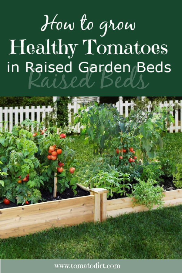 How to grow healthy tomatoes in raised garden beds with Tomato Dirt #GrowTomatoes #HomeGardening