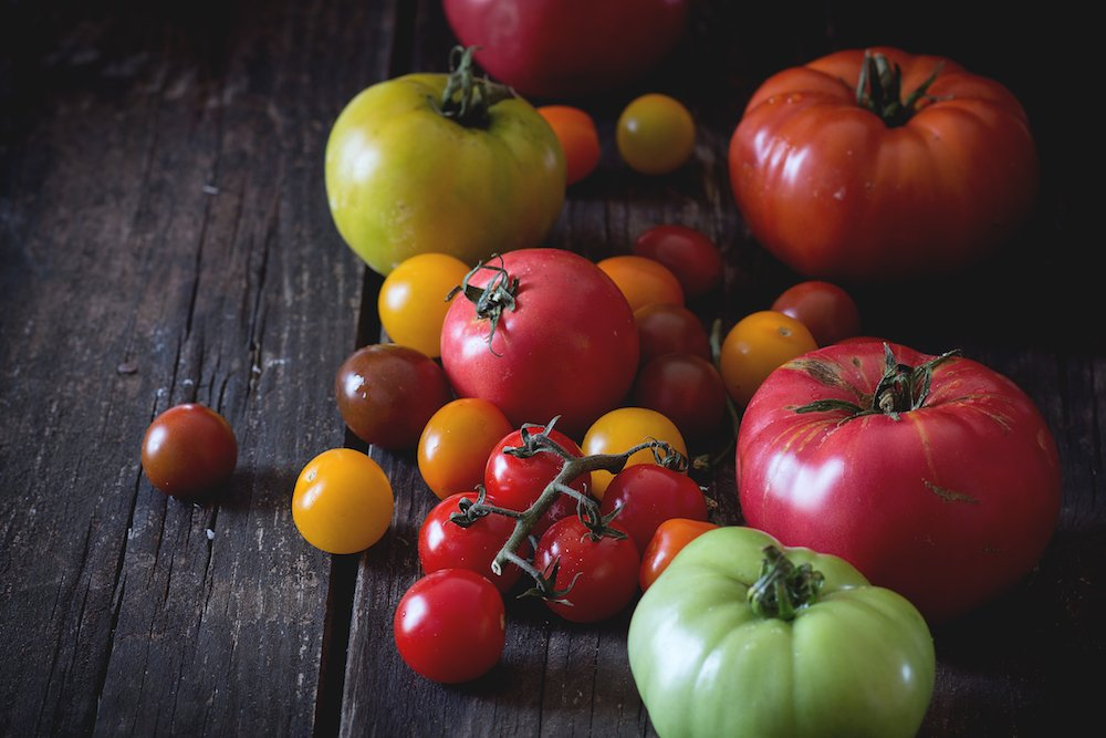 Fun Tomato Facts with Tomato Dirt