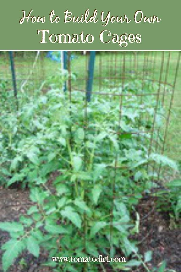How to build tomato cages with Tomato Dirt. Great tips for staking tomatoes #TomatoGrowingTips