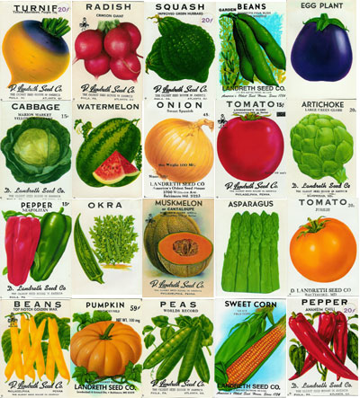Tomato seeds for sale via Landreth Seeds with Tomato Dirt