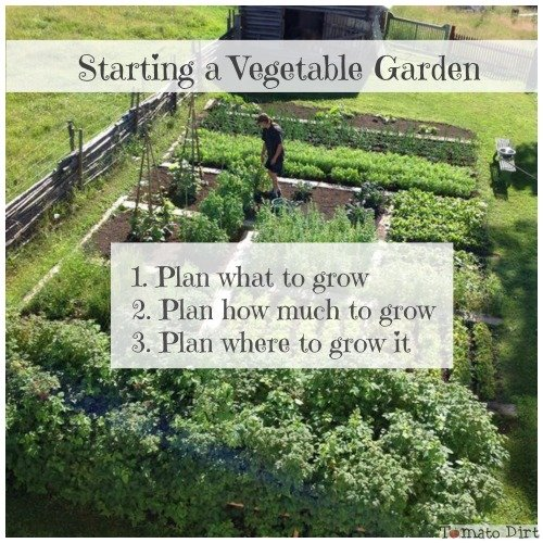 3 steps to starting a vegetable garden with Tomato Dirt