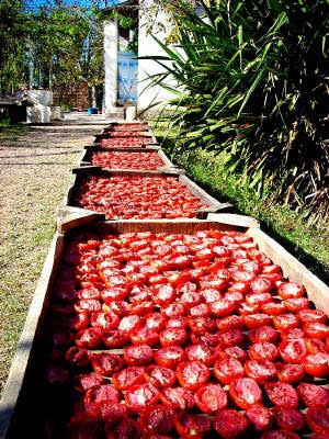 Sun drying tomatoes outdoors with Recipe Hubs via Tomato Dirt