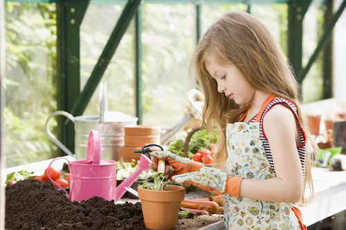 Potting mix for growing tomatoes in pots with Tomato Dirt